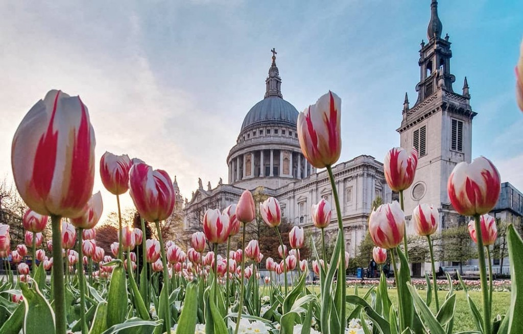 Celebrate Easter Mass at St.  Paul's Cathedral
